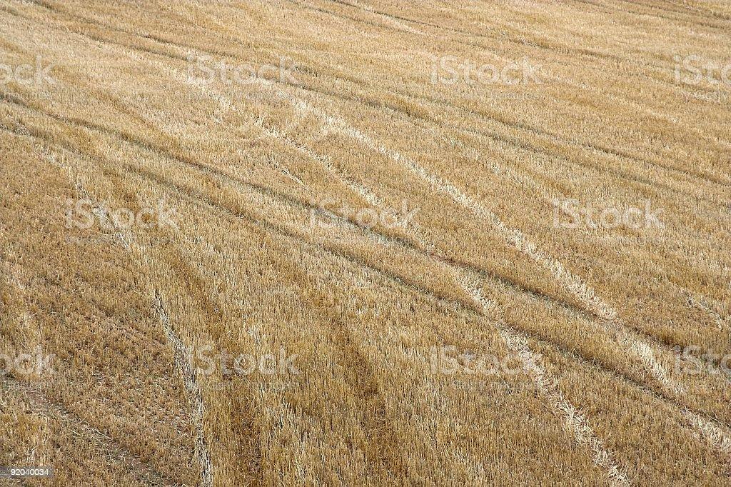 Stubble Field royalty-free stock photo