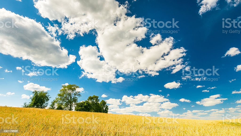 Stubble field under blue sky with white clouds stock photo