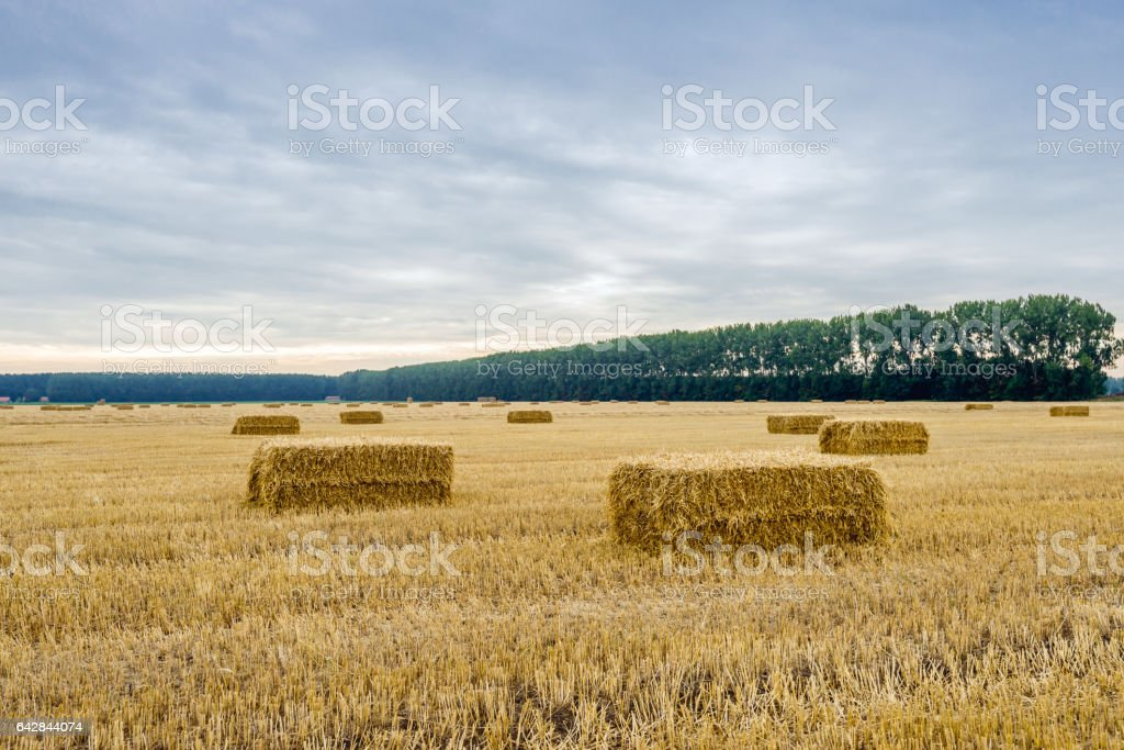 Stubble field with some bales of straw in the foreground stock photo