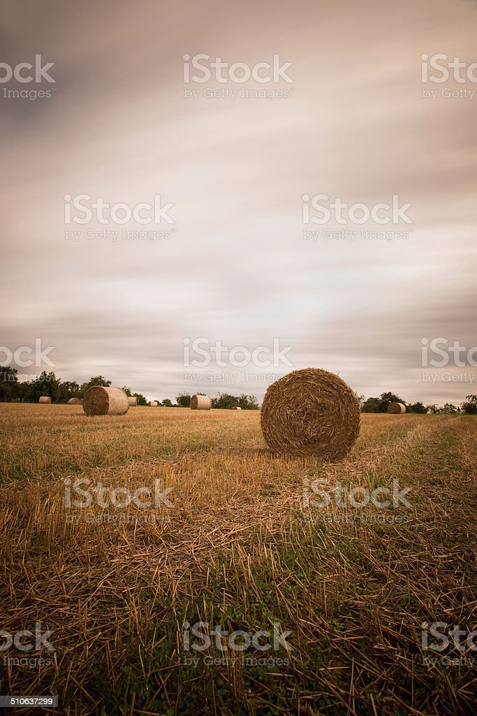 stubble field with straw bales stock photo
