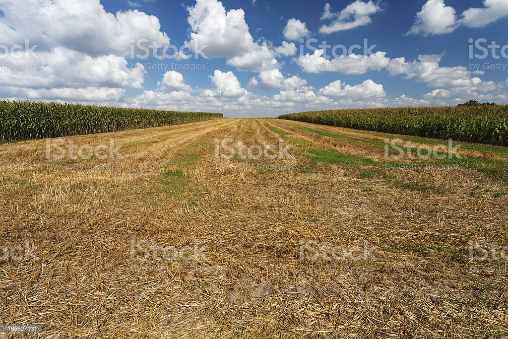 Stubble under blue cloudy sky royalty-free stock photo