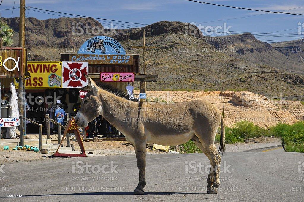 Stubborn Donkey  on Historic Route 66 royalty-free stock photo