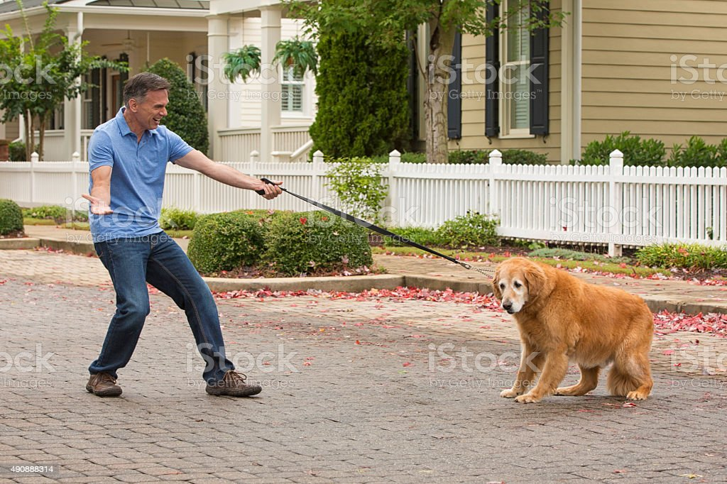 Stubborn old dog doesn't want to go for a walk stock photo