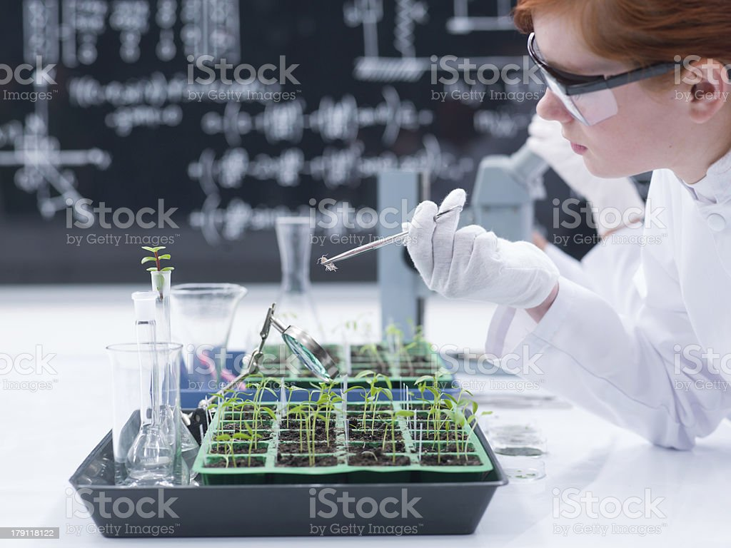 student analyzing in a chemistry lab royalty-free stock photo
