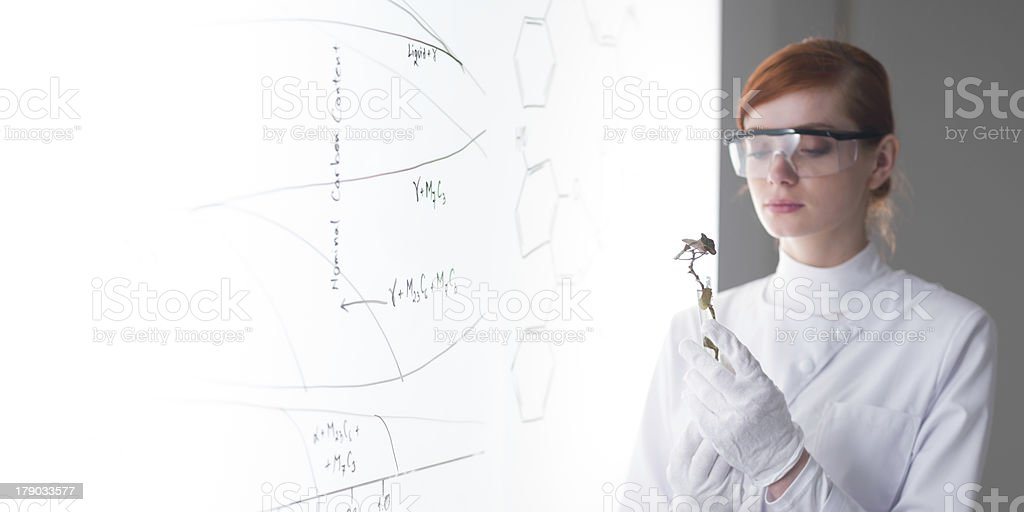 student in chemistry lab royalty-free stock photo