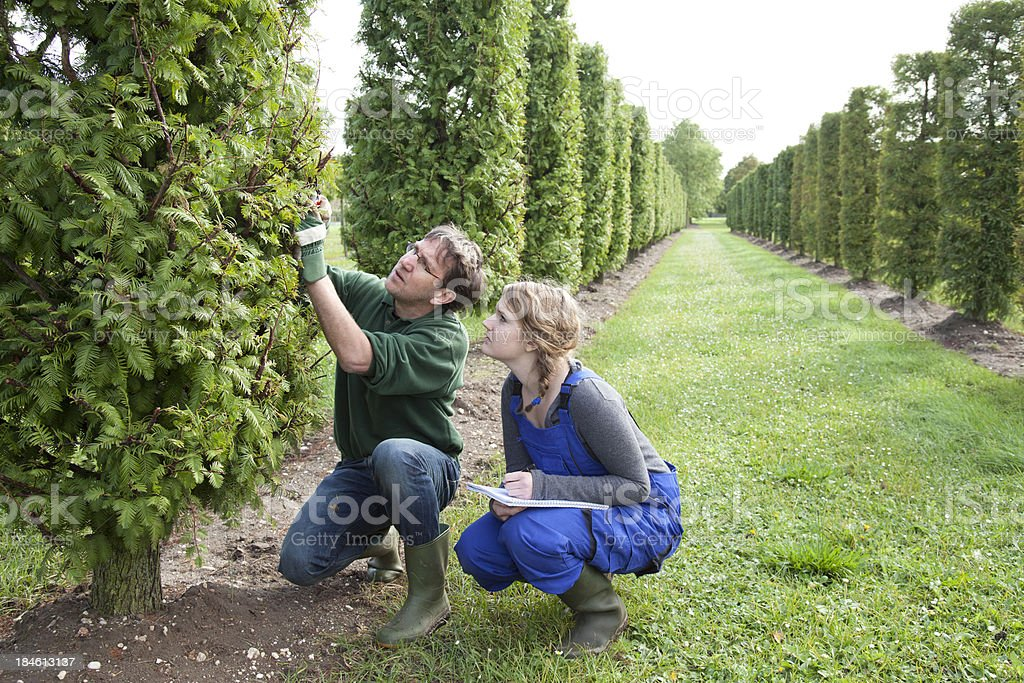 Student learn about pruning from an experienced instructor. stock photo