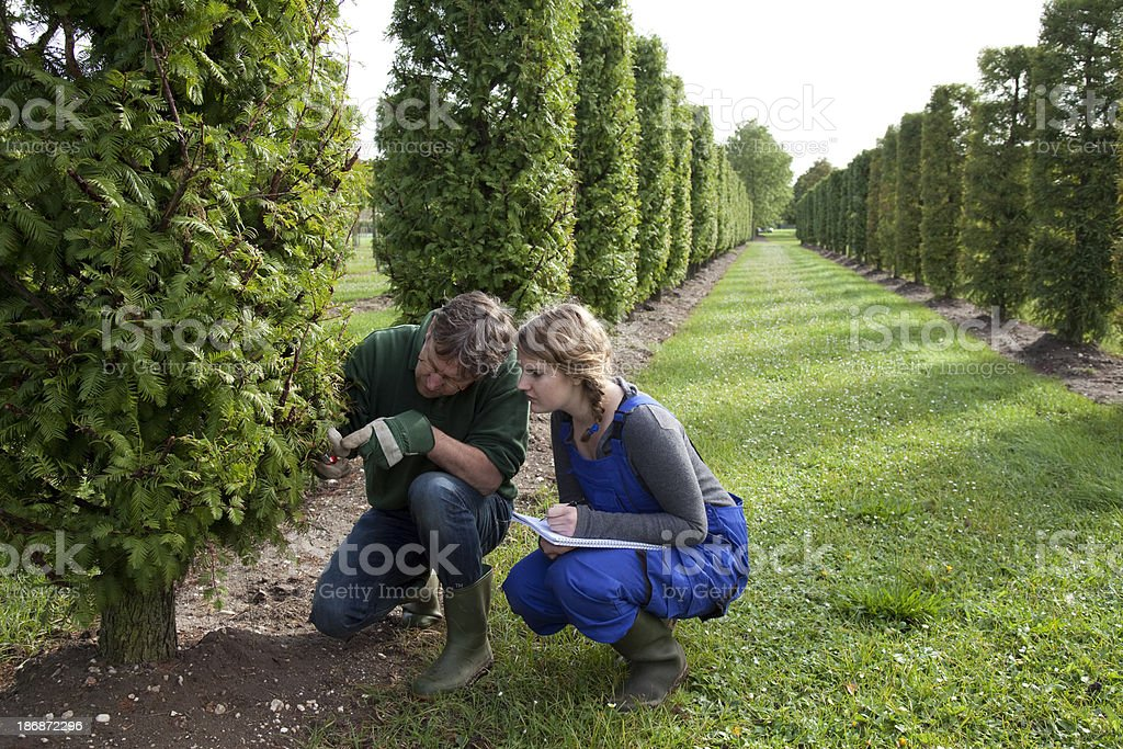 Student learn about pruning from an experienced mentor royalty-free stock photo