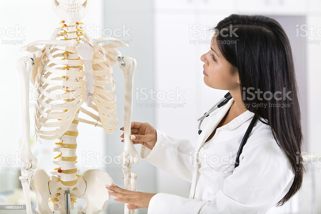 Student looking at human skeleton stock photo