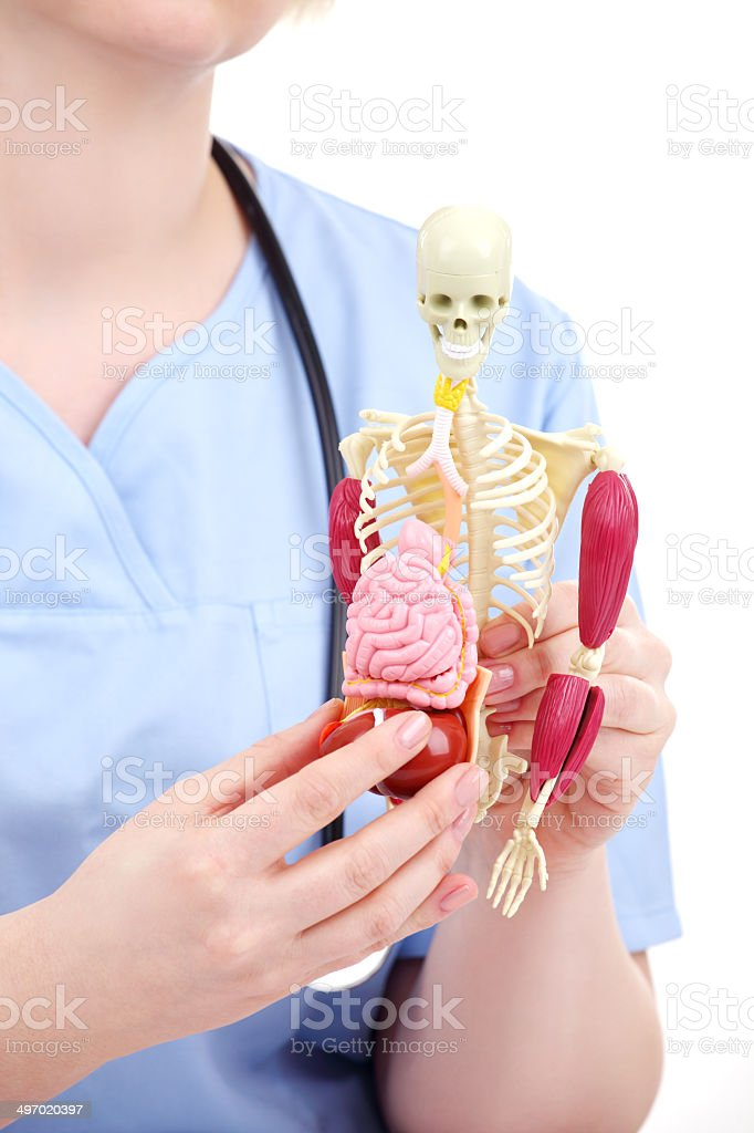student on anatomy class in blue uniform royalty-free stock photo