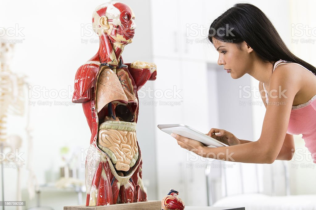 Student using digital tablet on anatomy class royalty-free stock photo