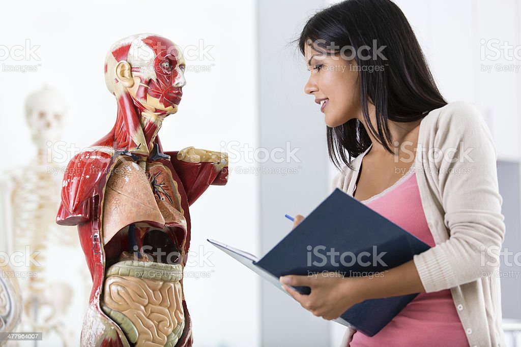 Student with anatomical model of human body royalty-free stock photo