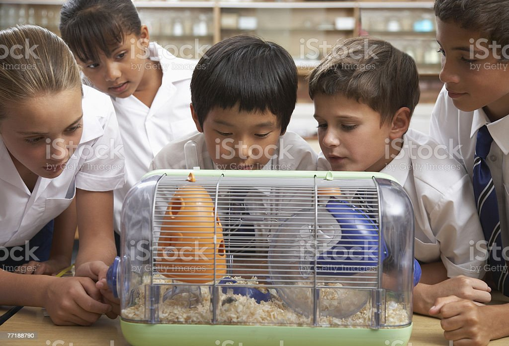 Students in class with the class pet royalty-free stock photo
