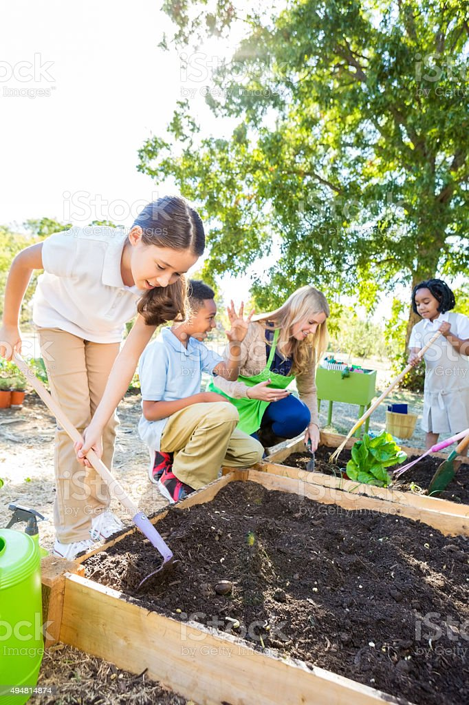 Students planting vegetables in garden during field trip outdoors stock photo