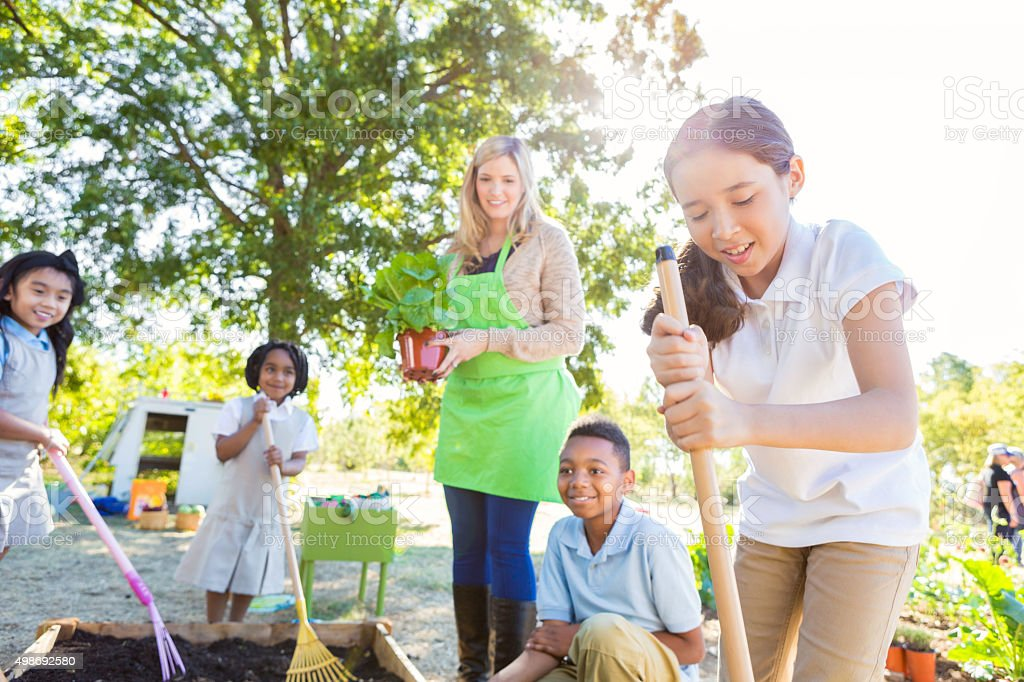 Students planting vegetables in school garden during science class stock photo