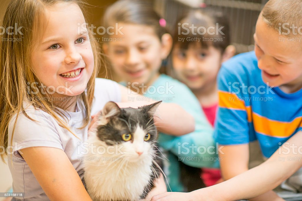 Students Volunteering at the Animal Shelter stock photo