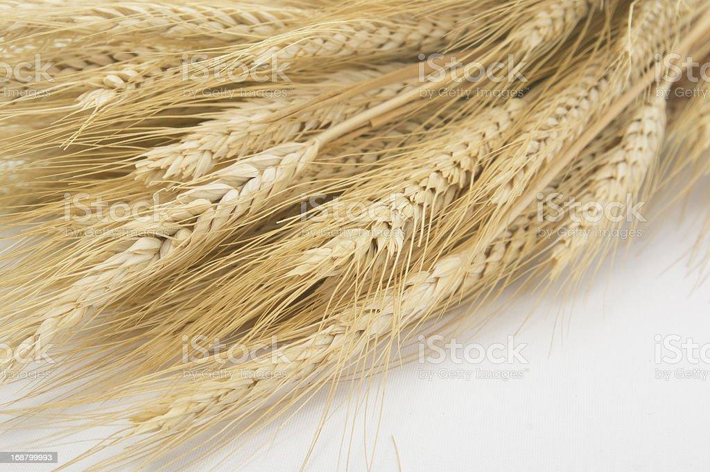Studio Close Up Wheat Stalks royalty-free stock photo