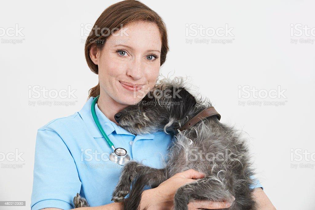 Studio Portrait Of Female Veterinary Surgeon Holding Lurcher Dog stock photo