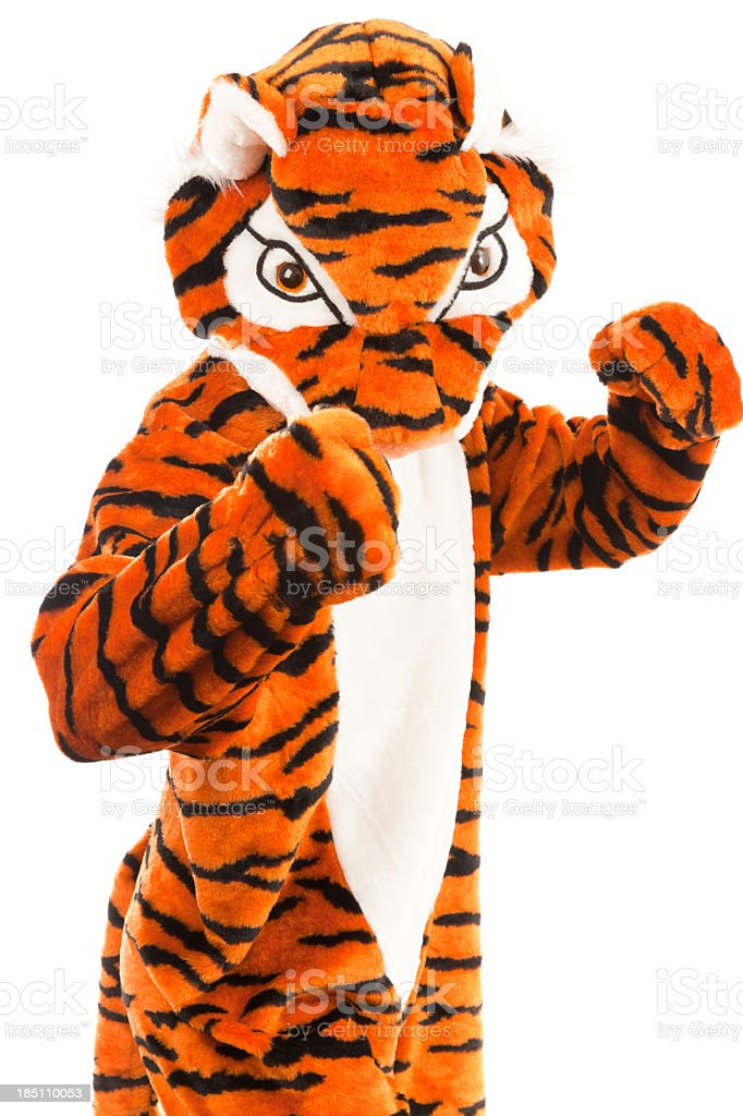 studio shot of a not so wild tiger royalty-free stock photo