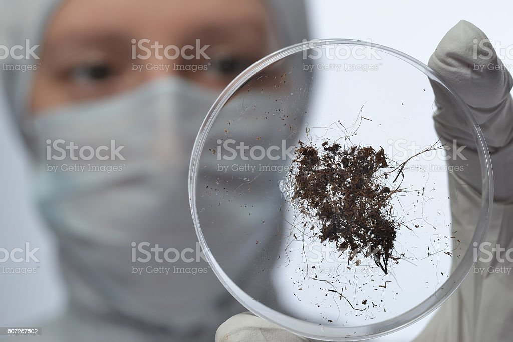 study land on the glass in the laboratory stock photo