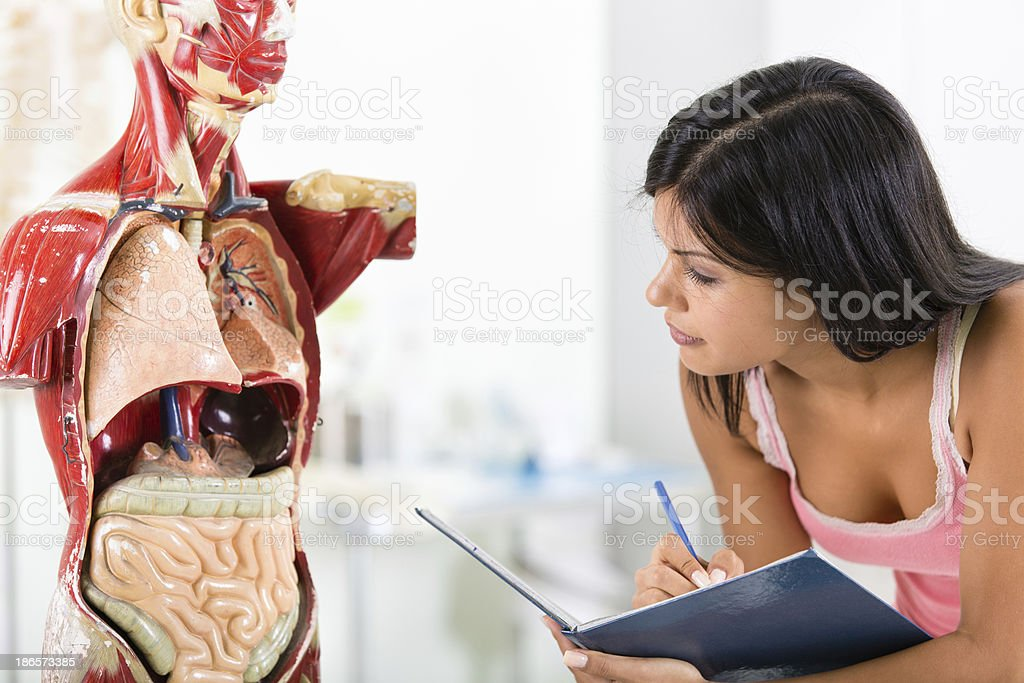 Studying human body royalty-free stock photo