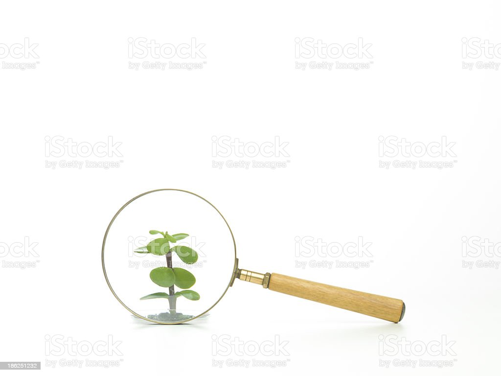 studying plant through a magnifying glass royalty-free stock photo
