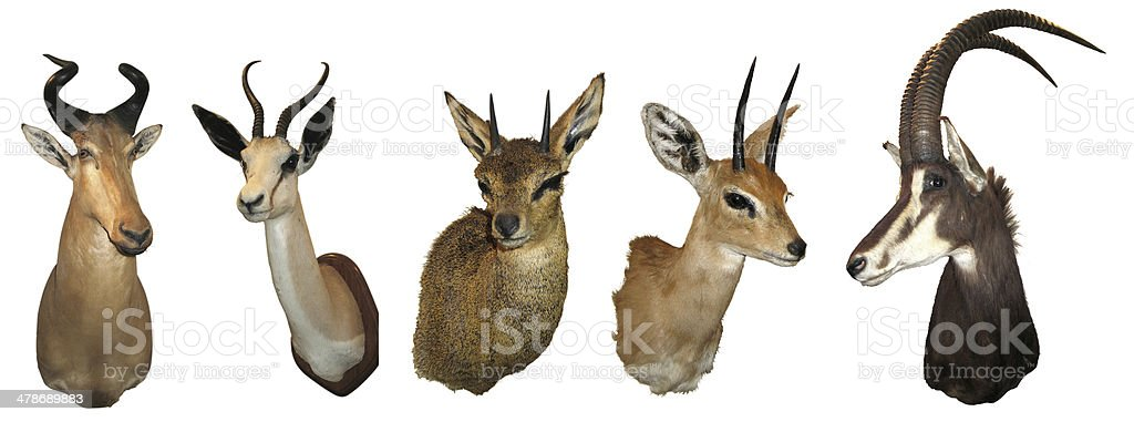 Stuffed animals antelope stock photo