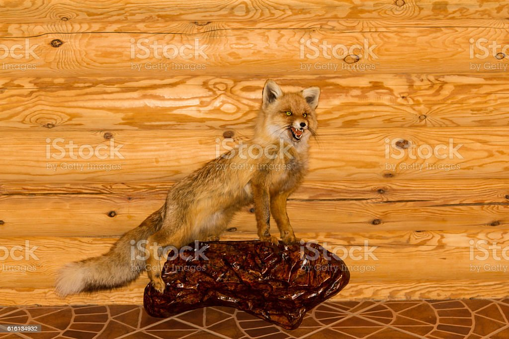 stuffed red fox stock photo