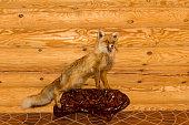 stuffed red fox