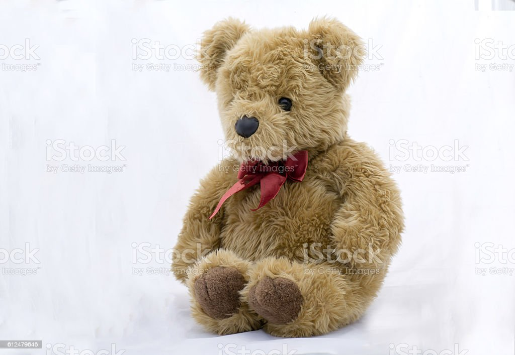 stuffed toy bear  on a white background stock photo