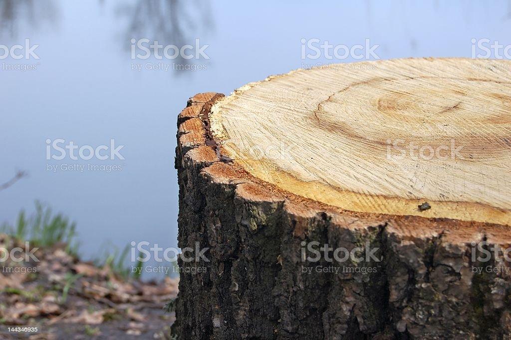 Stump at the river shore. Wood rings. royalty-free stock photo