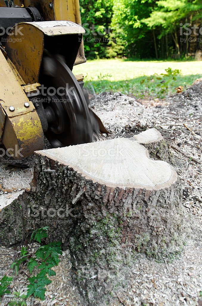 Stump Grinder stock photo