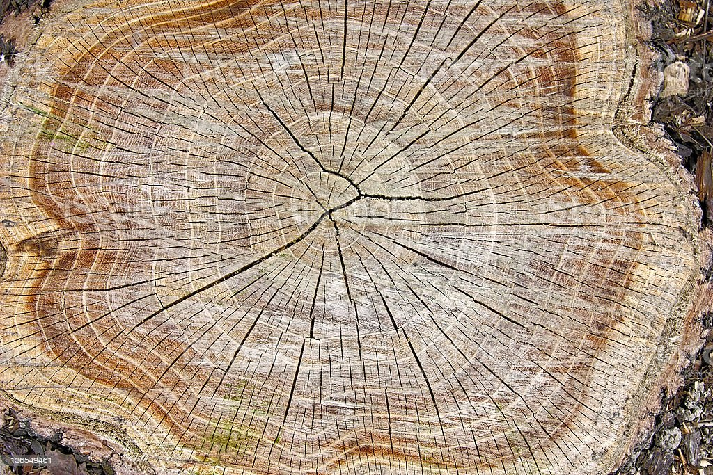 Stump of a tree showing its inside structures and wood royalty-free stock photo