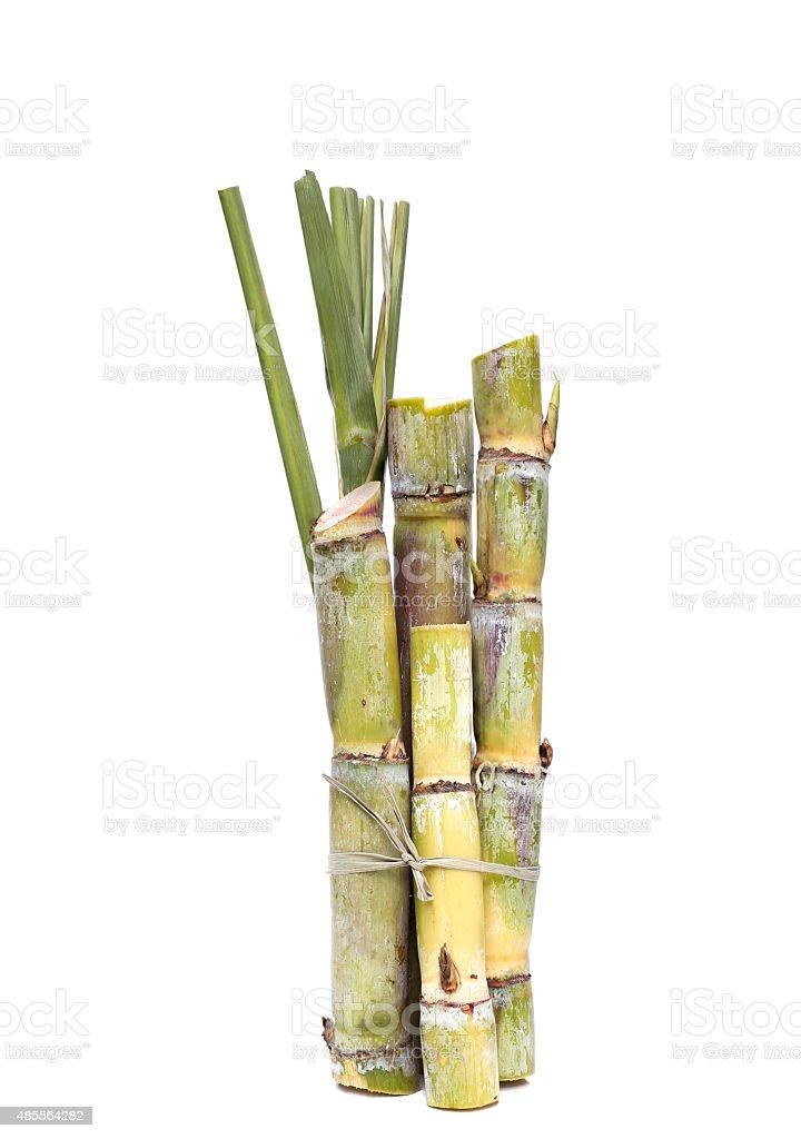 Stump of Sugar cane isolated stock photo