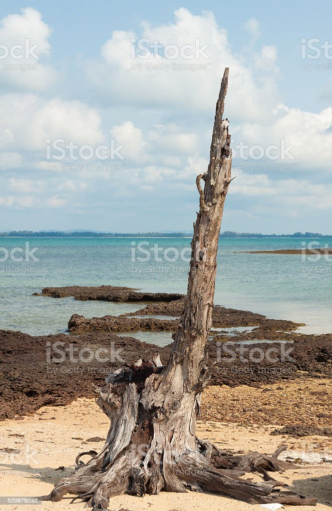 Stump on beach of island in thailand royalty-free stock photo