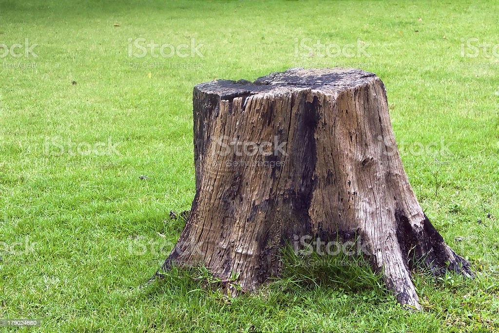 Stump on green grass stock photo