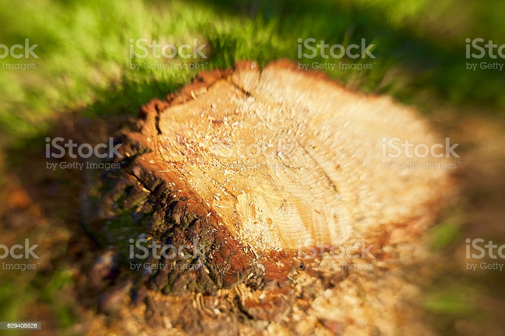 Stump on green grass with wood chippings stock photo