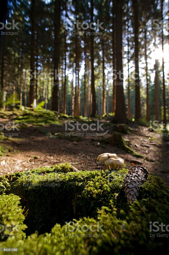 Stump royalty-free stock photo