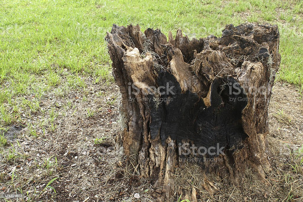 Stumps with scalloping of sorts on edges royalty-free stock photo