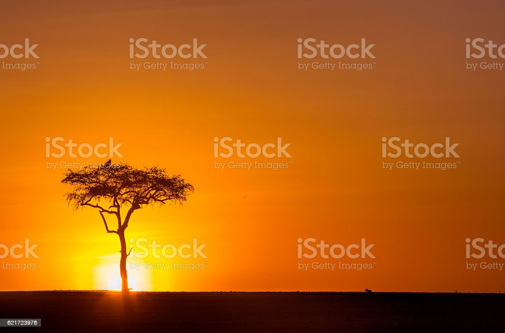 Stunning African sunrise with tree, bird of prey and warthog. stock photo