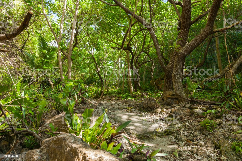 stunning bush walk to wonderful Matapa Chasm a popular travel destination on island of Niue in South Pacific stock photo