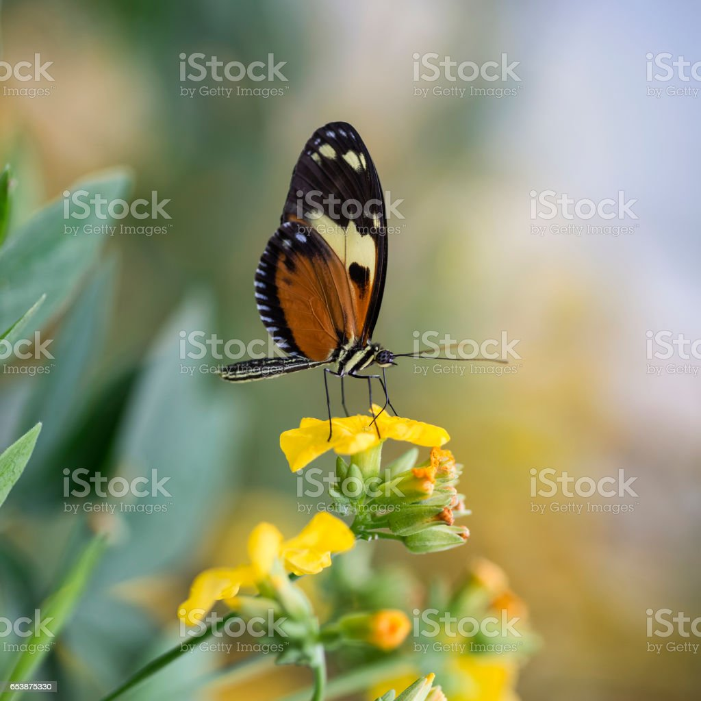 Beautiful butterfly insect on vibrant yellow flower