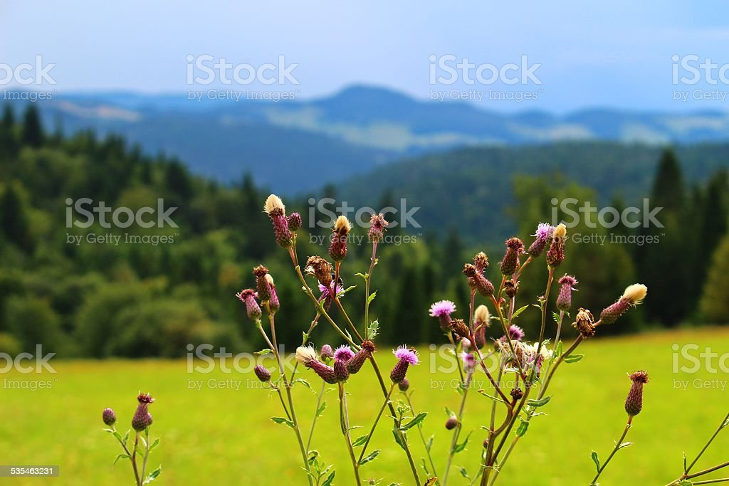 Stunning mountain flower stock photo