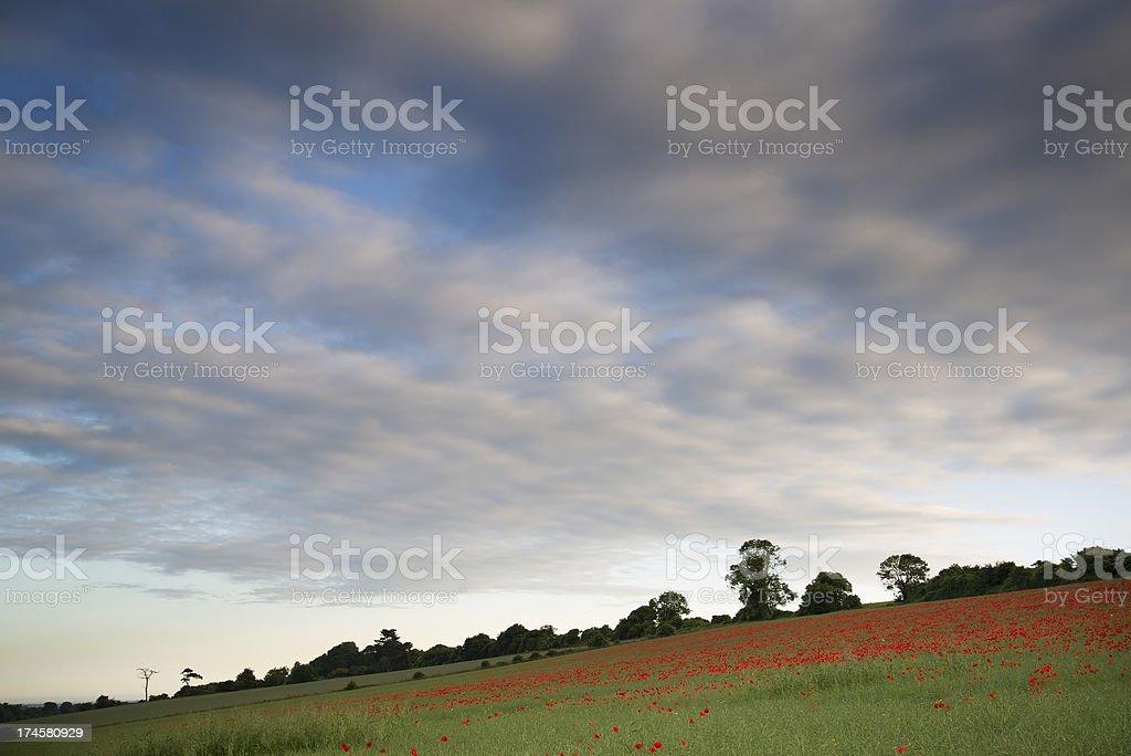 Stunning poppy field landscape under Summer sunset sky royalty-free stock photo
