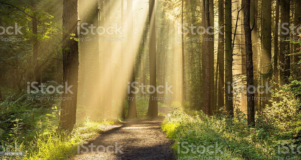 Stunning Rays Of Light Entering Forest Through Trees. stock photo