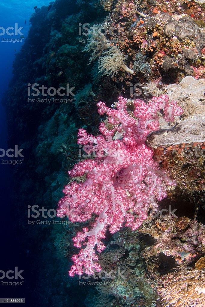 Stunning reef in Palau, Micronesia stock photo
