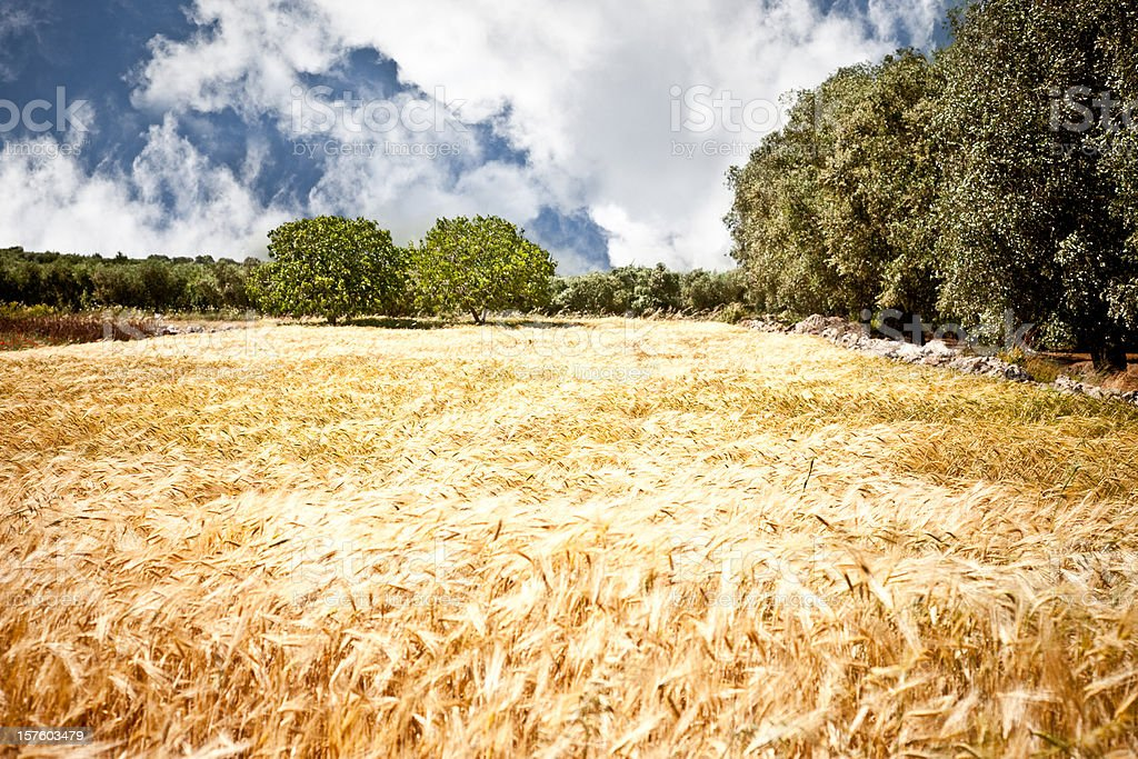 Stunning Salento Landscape stock photo