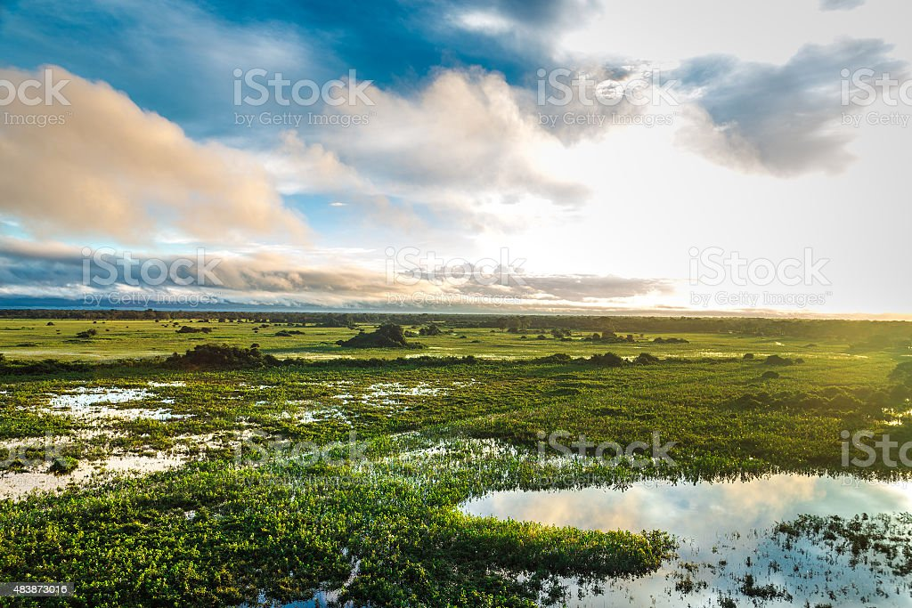 Stunning Wetland landscape in Pantanal located in Brazil stock photo