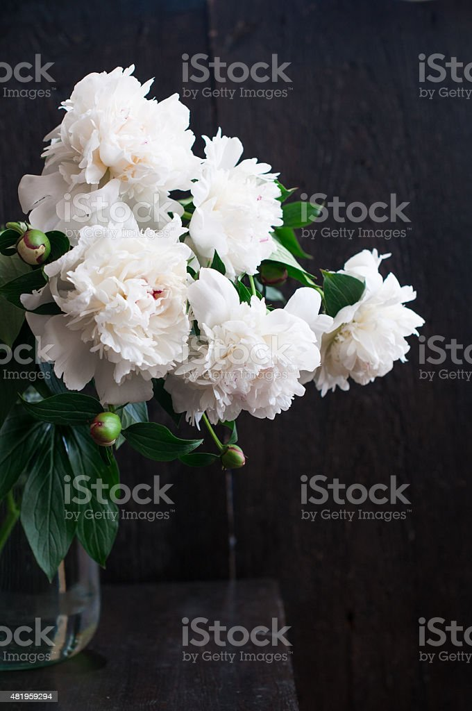 Stunning white peonies on rustic wooden background stock photo