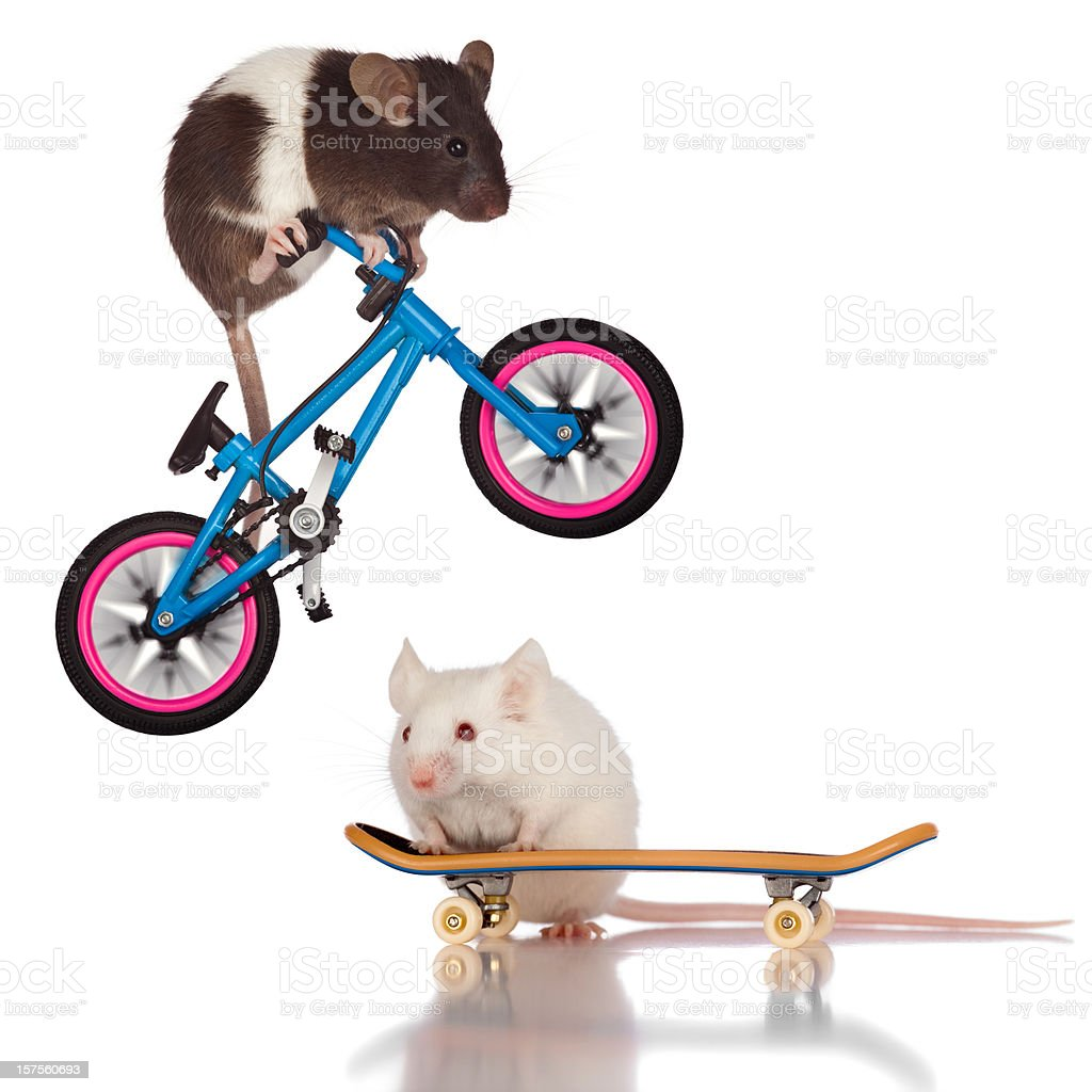 Stunt Mice; Bicycle Riding Mouse Jumping Over Skateboarder Friend stock photo