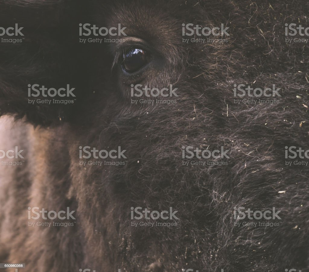 Stupid funny face of the giant shaggy animal in macro view. stock photo